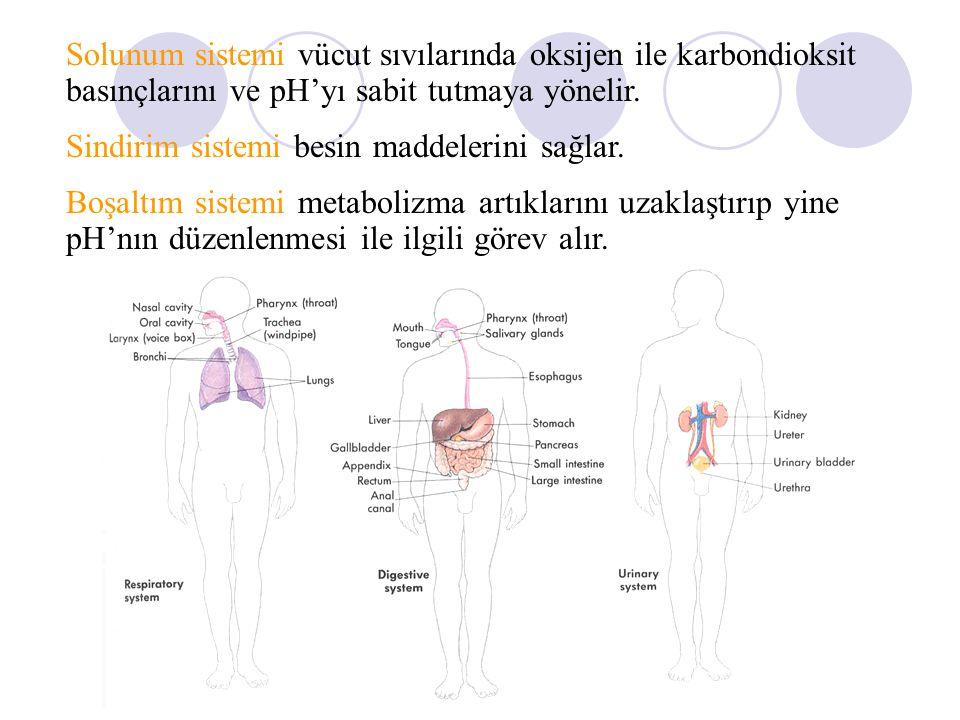 Solunum sistemi vücut sıvılarında oksijen ile karbondioksit basınçlarını ve pH'yı sabit tutmaya yönelir. Sindirim sistemi besin maddelerini sağlar. Bo
