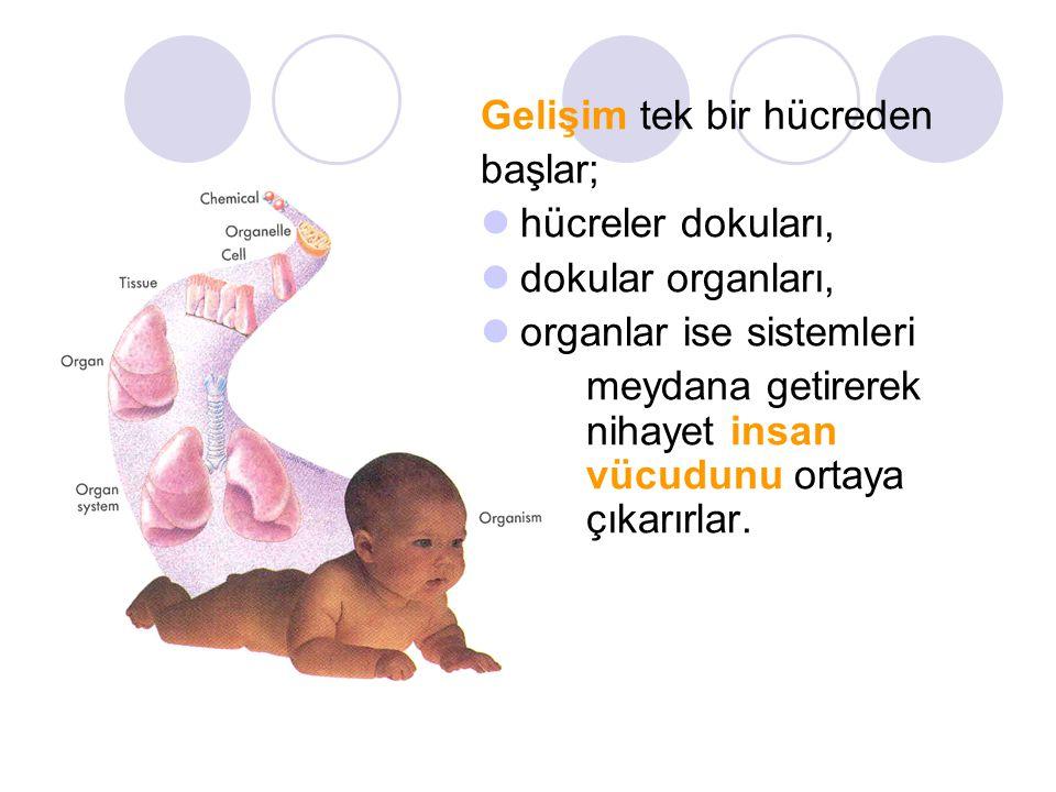 Gelişim tek bir hücreden başlar; hücreler dokuları, dokular organları, organlar ise sistemleri meydana getirerek nihayet insan vücudunu ortaya çıkarır