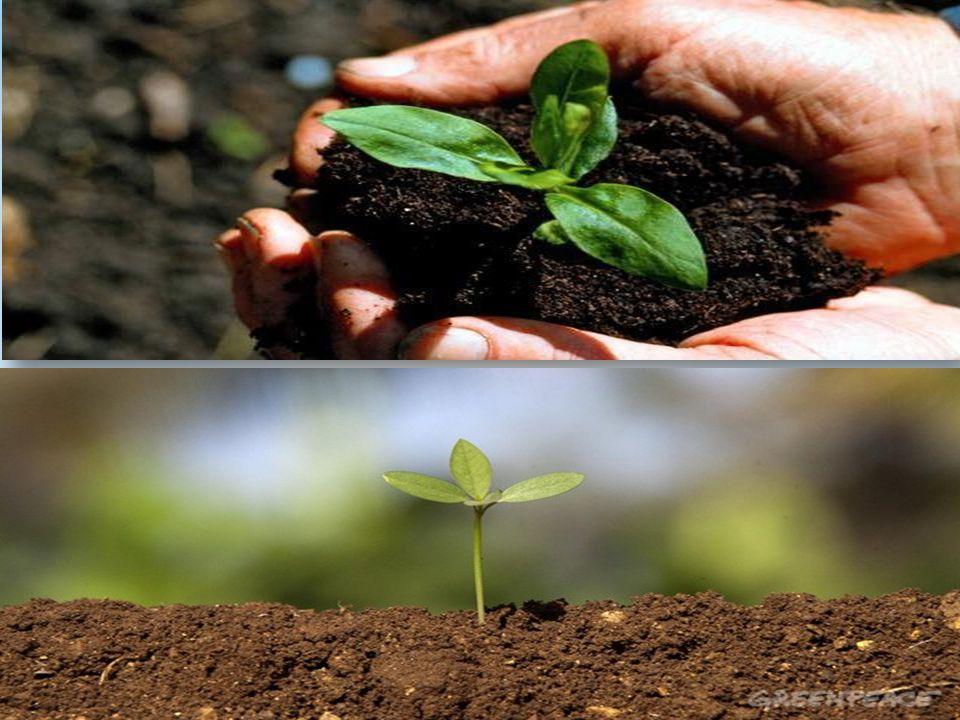 * Artan ihtiyaç ve teknolojik imkanlar ilkel tarımdan sulu tarıma geçişle birlikte ziraat faaliyetlerinde modern tarım tekniklerinin kullanılmasını gerekli kılmıştır.