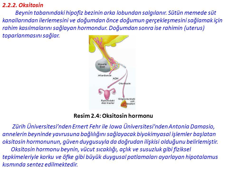 2.2.2.Oksitosin Beynin tabanındaki hipofiz bezinin arka lobundan salgılanır.