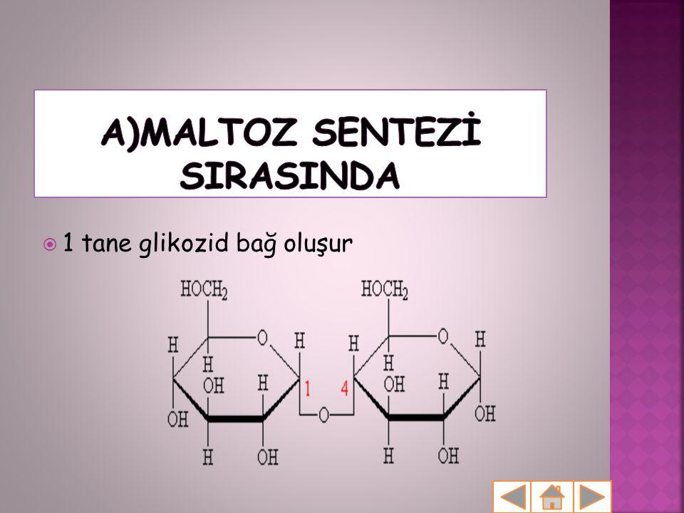 1 tane glikozid bağ oluşur