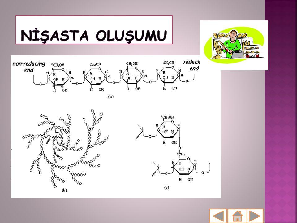  Bitkilerin tanelerinde, tohumlarında ve yumrularında depo edilmiş halde bulunan bir karbonhidrattır.