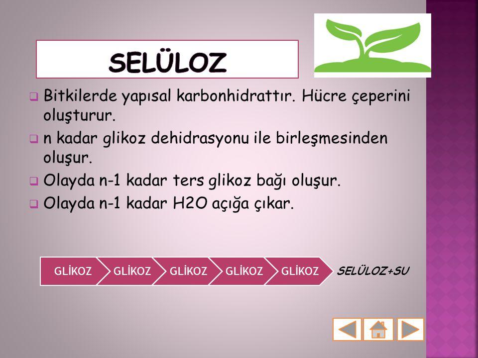  Bitkilerde yapısal karbonhidrattır. Hücre çeperini oluşturur.  n kadar glikoz dehidrasyonu ile birleşmesinden oluşur.  Olayda n-1 kadar ters gliko