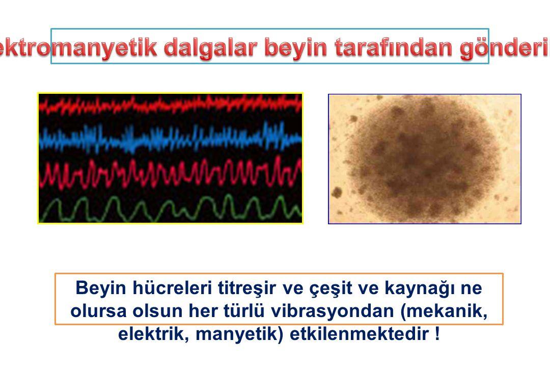Beyin hücreleri titreşir ve çeşit ve kaynağı ne olursa olsun her türlü vibrasyondan (mekanik, elektrik, manyetik) etkilenmektedir !