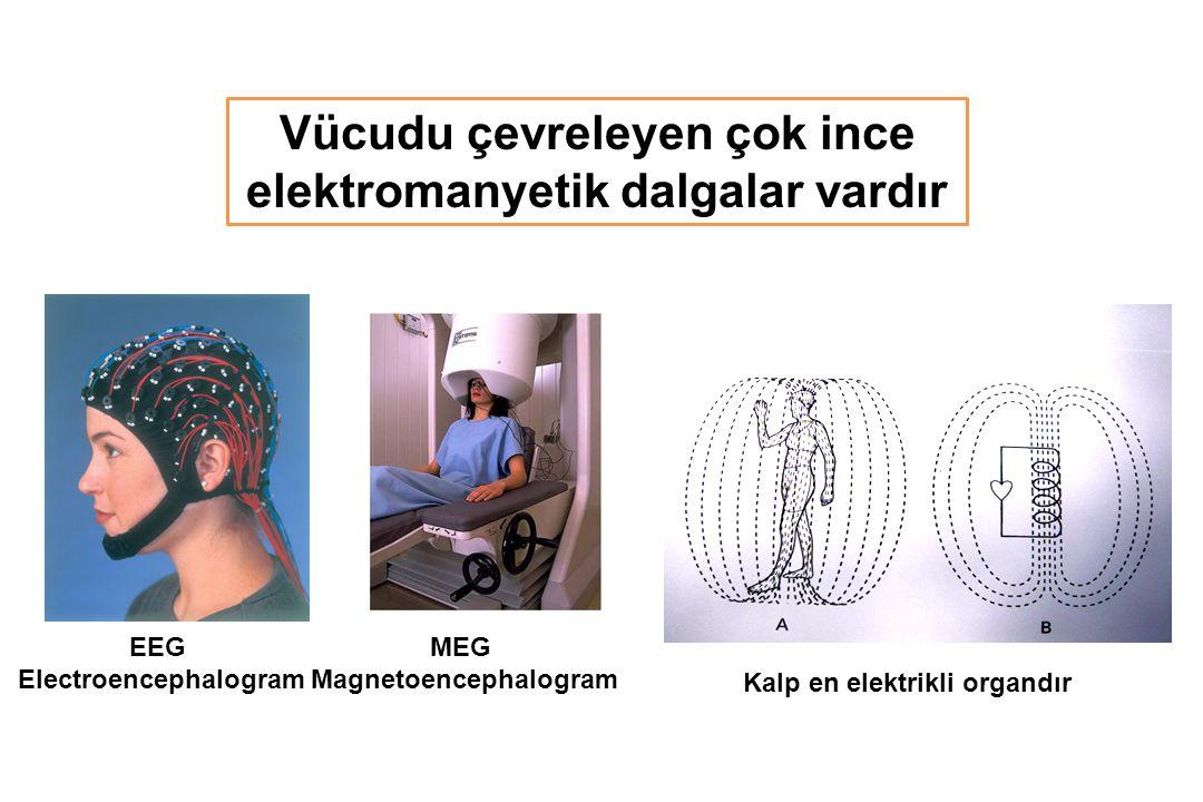 EEG Electroencephalogram MEG Magnetoencephalogram Vücudu çevreleyen çok ince elektromanyetik dalgalar vardır Kalp en elektrikli organdır
