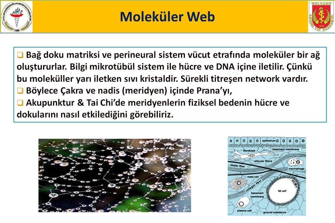 Moleküler Web