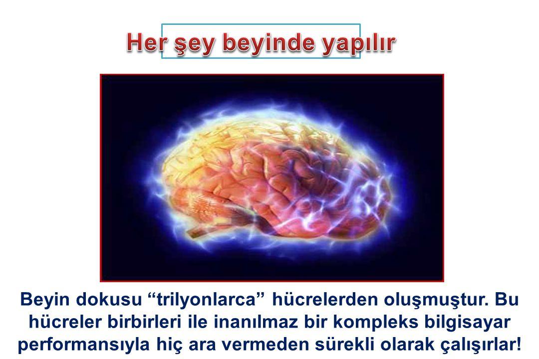 Beyin dokusu trilyonlarca hücrelerden oluşmuştur.