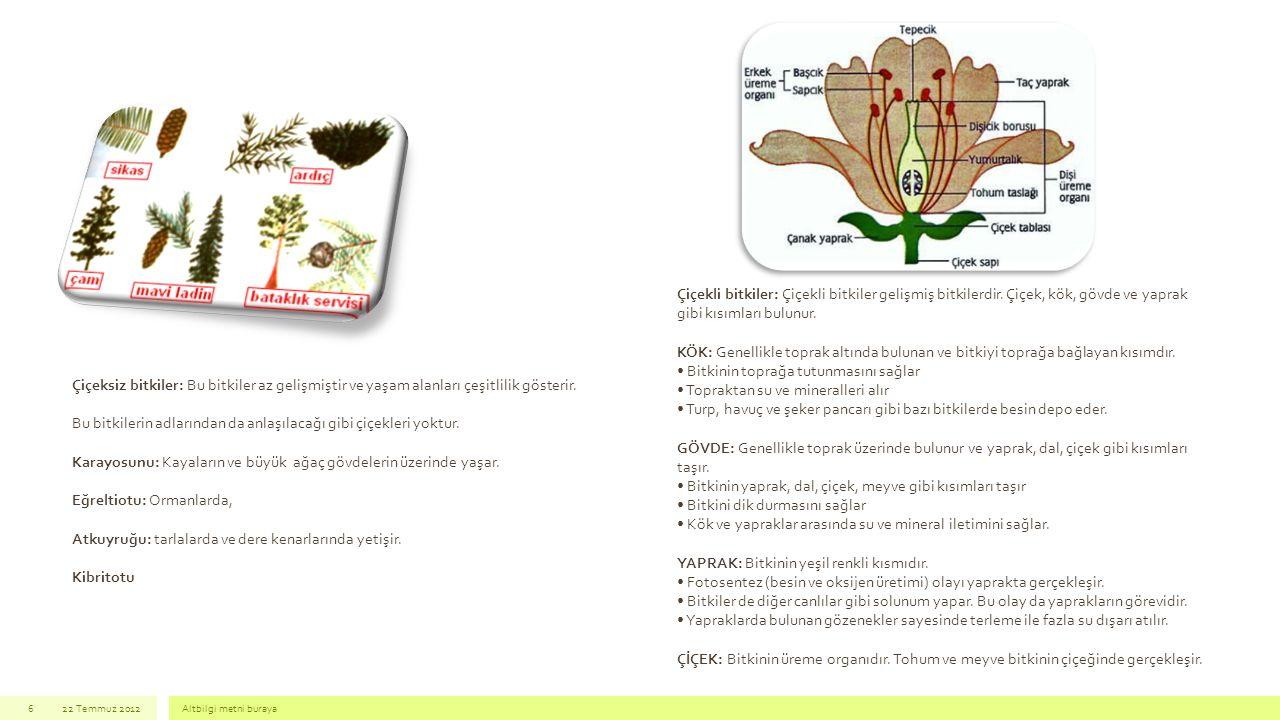 22 Temmuz 2012Altbilgi metni buraya6 Çiçeksiz bitkiler: Bu bitkiler az gelişmiştir ve yaşam alanları çeşitlilik gösterir. Bu bitkilerin adlarından da