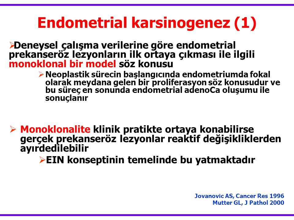 Endometrial karsinogenez (1)  Deneysel çalışma verilerine göre endometrial prekanseröz lezyonların ilk ortaya çıkması ile ilgili monoklonal bir model söz konusu  Neoplastik sürecin başlangıcında endometriumda fokal olarak meydana gelen bir proliferasyon söz konusudur ve bu süreç en sonunda endometrial adenoCa oluşumu ile sonuçlanır Jovanovic AS, Cancer Res 1996 Mutter GL, J Pathol 2000  Monoklonalite klinik pratikte ortaya konabilirse gerçek prekanseröz lezyonlar reaktif değişikliklerden ayırdedilebilir  EIN konseptinin temelinde bu yatmaktadır
