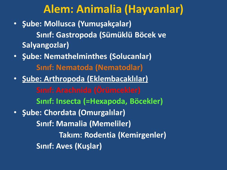 Alem: Animalia (Hayvanlar) Şube: Mollusca (Yumuşakçalar) Sınıf: Gastropoda (Sümüklü Böcek ve Salyangozlar) Şube: Nemathelminthes (Solucanlar) Sınıf: Nematoda (Nematodlar) Şube: Arthropoda (Eklembacaklılar) Sınıf: Arachnida (Örümcekler) Sınıf: Insecta (=Hexapoda, Böcekler) Şube: Chordata (Omurgalılar) Sınıf: Mamalia (Memeliler) Takım: Rodentia (Kemirgenler) Sınıf: Aves (Kuşlar)