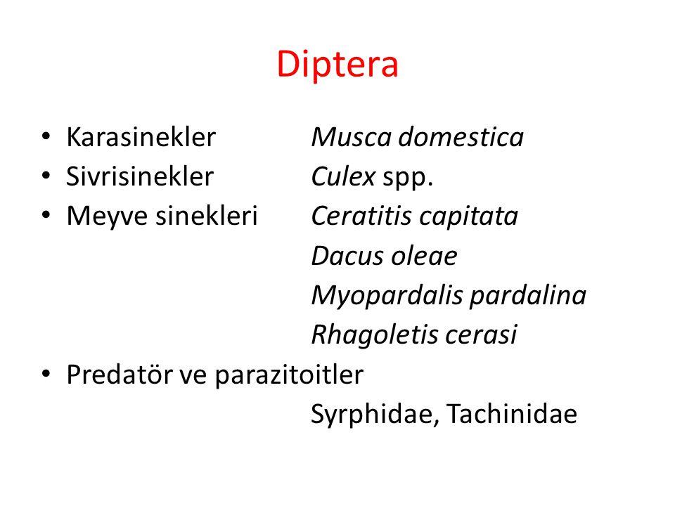 Diptera Karasinekler Musca domestica SivrisineklerCulex spp. Meyve sinekleri Ceratitis capitata Dacus oleae Myopardalis pardalina Rhagoletis cerasi Pr