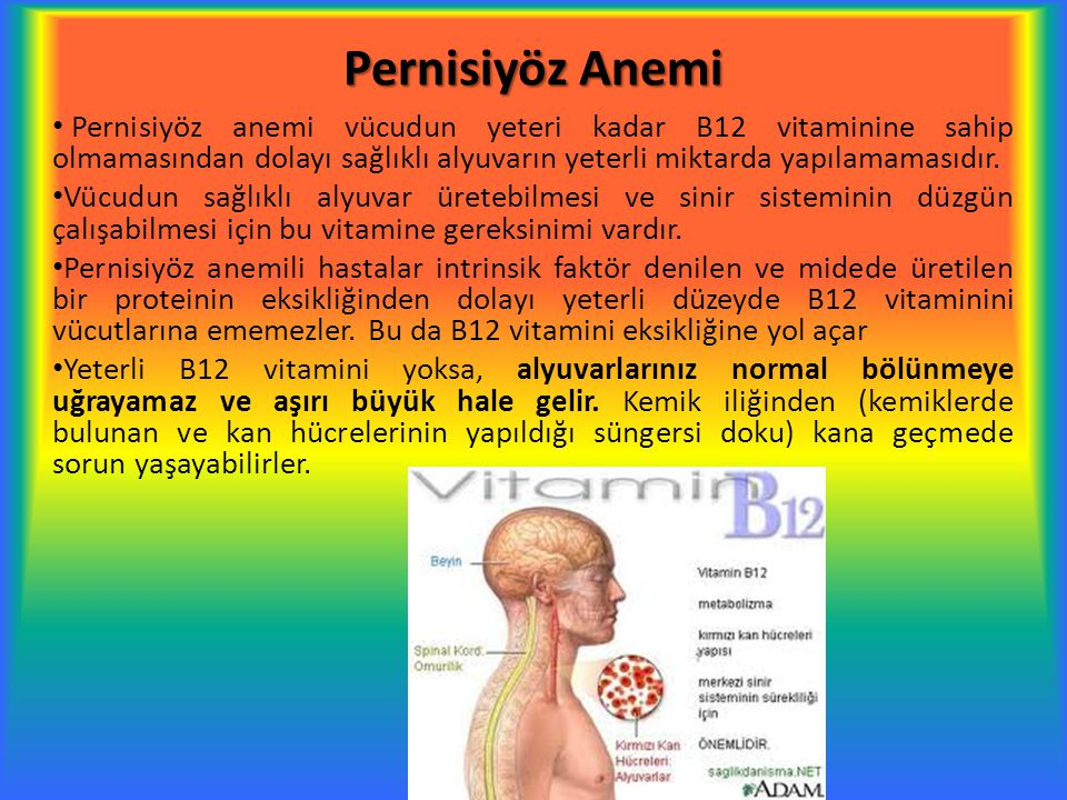 Pernisiyöz Anemi Pernisiyöz anemi vücudun yeteri kadar B12 vitaminine sahip olmamasından dolayı sağlıklı alyuvarın yeterli miktarda yapılamamasıdır. V