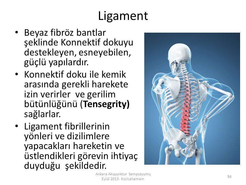 Ligament Beyaz fibröz bantlar şeklinde Konnektif dokuyu destekleyen, esneyebilen, güçlü yapılardır. Konnektif doku ile kemik arasında gerekli harekete