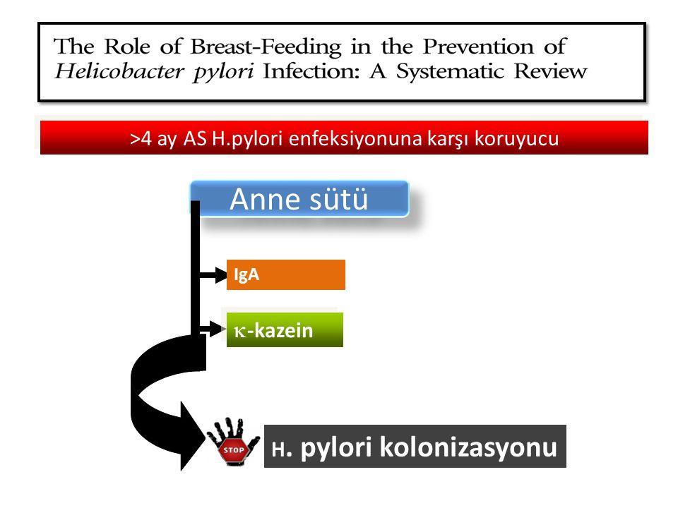 >4 ay AS H.pylori enfeksiyonuna karşı koruyucu Anne sütü IgA  -kazein H. pylori kolonizasyonu