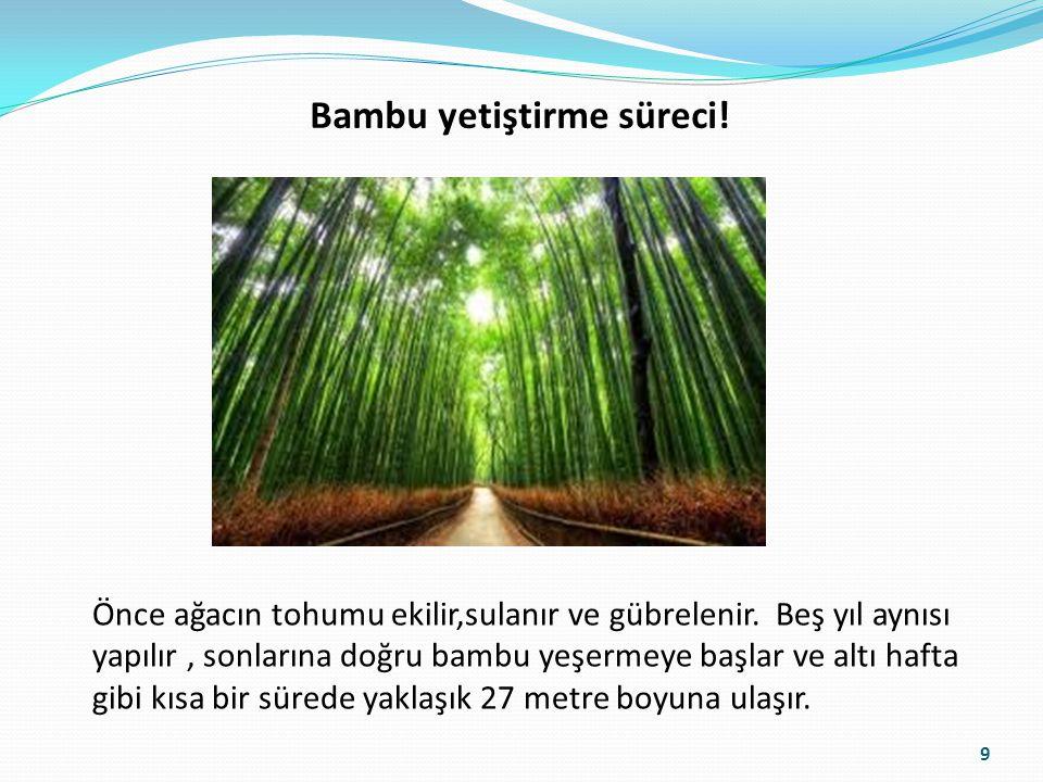 Bambu yetiştirme süreci! Önce ağacın tohumu ekilir,sulanır ve gübrelenir. Beş yıl aynısı yapılır, sonlarına doğru bambu yeşermeye başlar ve altı hafta