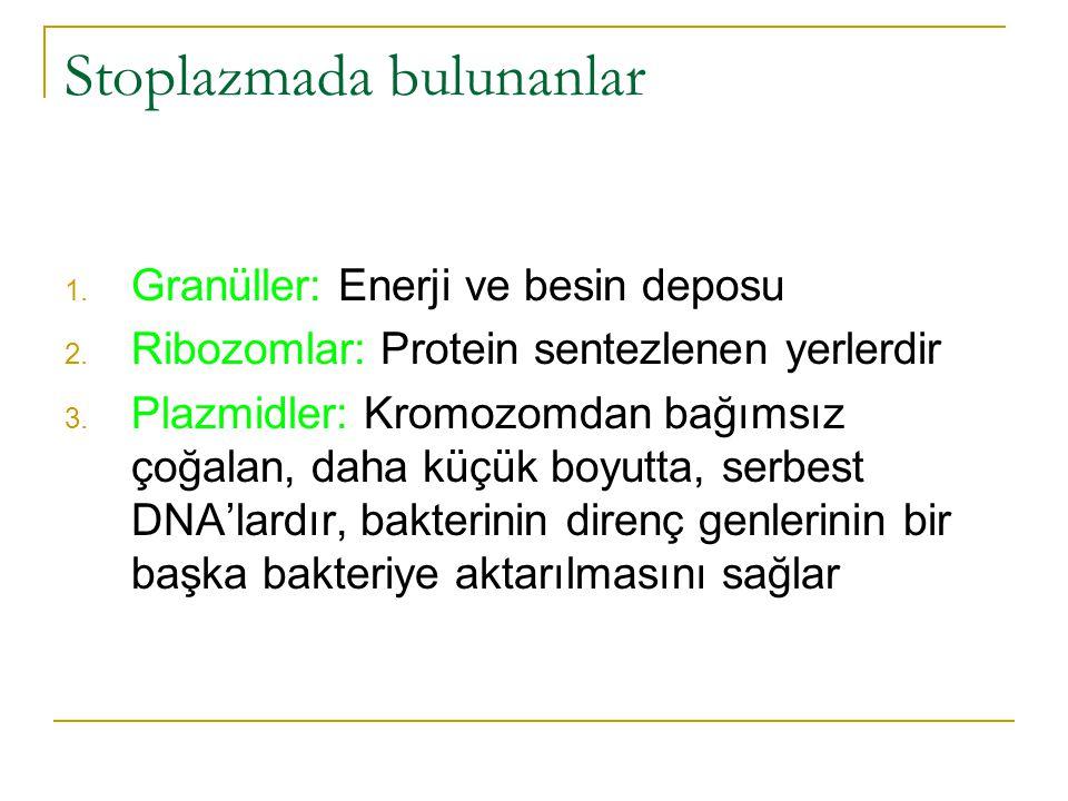 Stoplazmada bulunanlar 1. Granüller: Enerji ve besin deposu 2. Ribozomlar: Protein sentezlenen yerlerdir 3. Plazmidler: Kromozomdan bağımsız çoğalan,