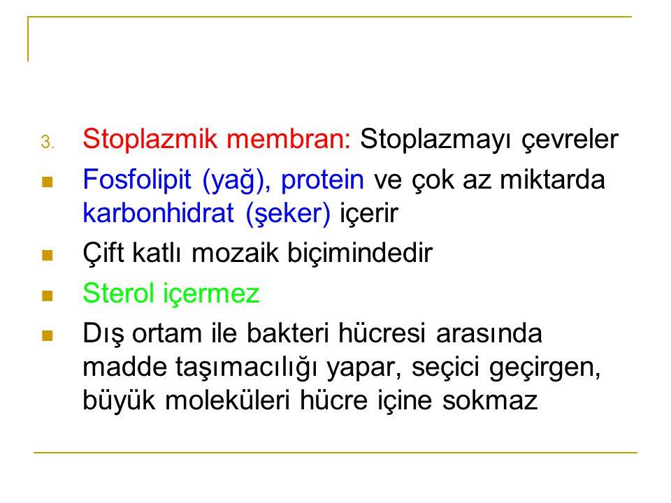 3. Stoplazmik membran: Stoplazmayı çevreler Fosfolipit (yağ), protein ve çok az miktarda karbonhidrat (şeker) içerir Çift katlı mozaik biçimindedir St