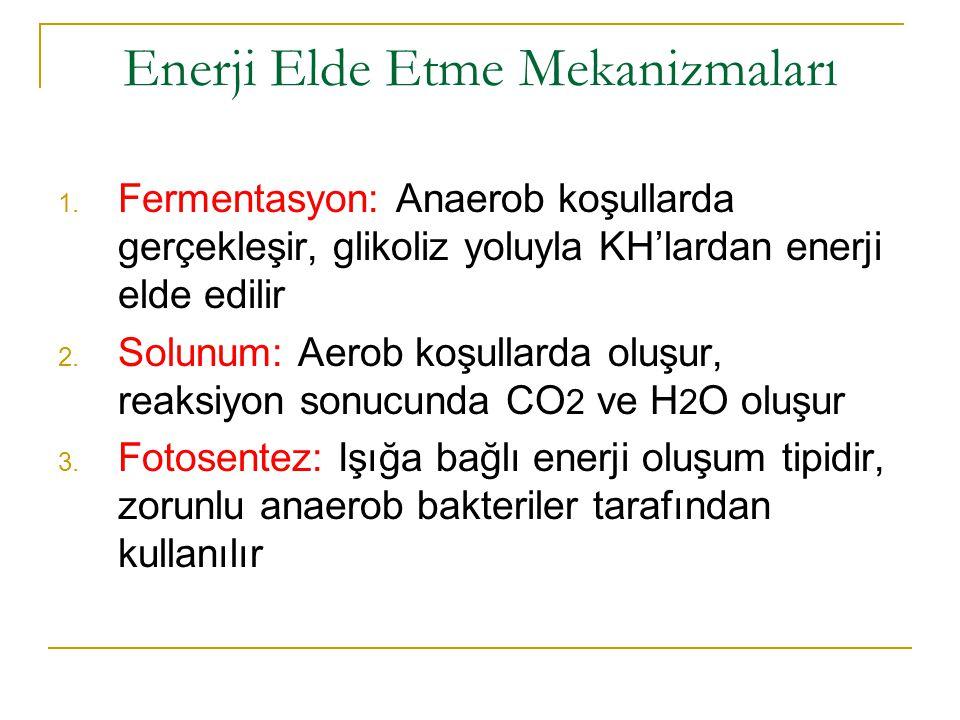 Enerji Elde Etme Mekanizmaları 1. Fermentasyon: Anaerob koşullarda gerçekleşir, glikoliz yoluyla KH'lardan enerji elde edilir 2. Solunum: Aerob koşull