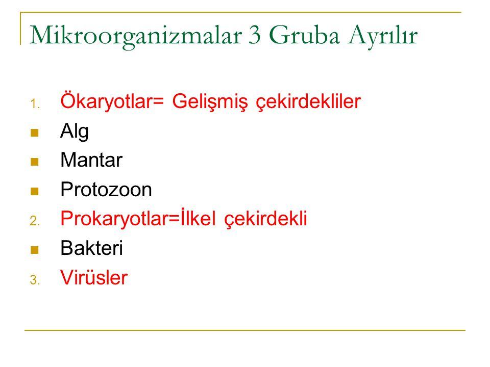 Bakterilerde Hücre Şekilleri 1.Koklar: Yuvarlak biçimli, örnek stafilokoklar ve streptokoklar 2.