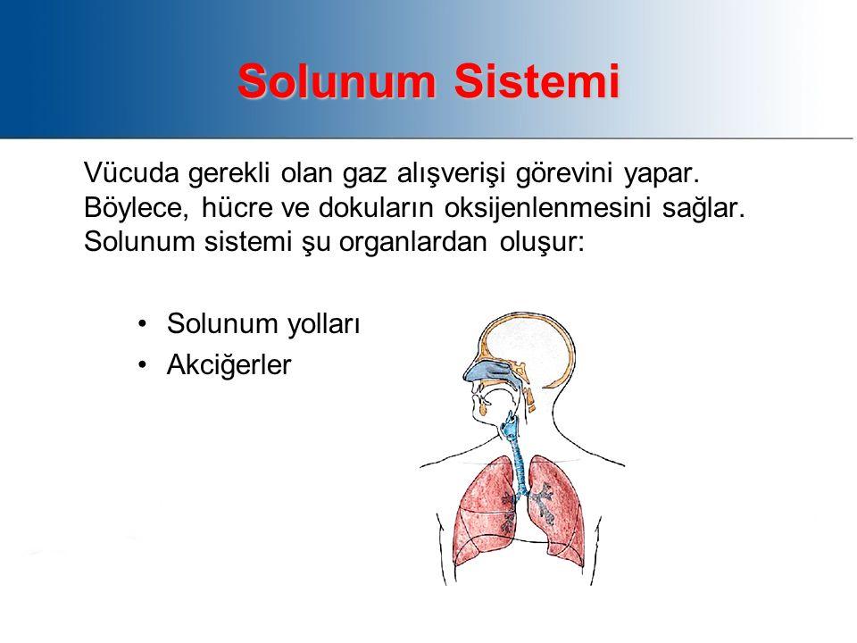 Solunum Sistemi Vücuda gerekli olan gaz alışverişi görevini yapar.