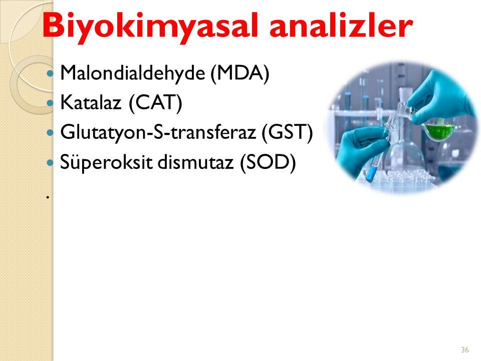 Malondialdehyde (MDA) Katalaz (CAT) Glutatyon-S-transferaz (GST) Süperoksit dismutaz (SOD). Biyokimyasal analizler 36