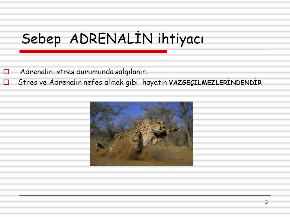 3 Sebep ADRENALİN ihtiyacı  Adrenalin, stres durumunda salgılanır.