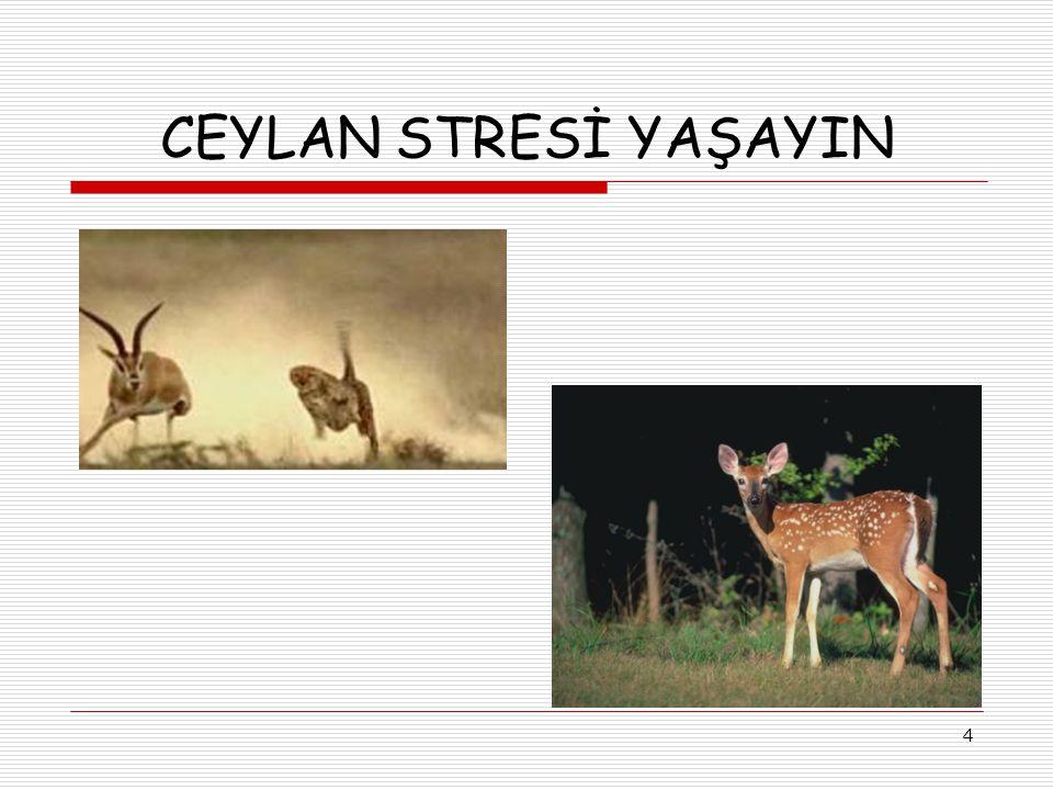 CEYLAN STRESİ YAŞAYIN 4