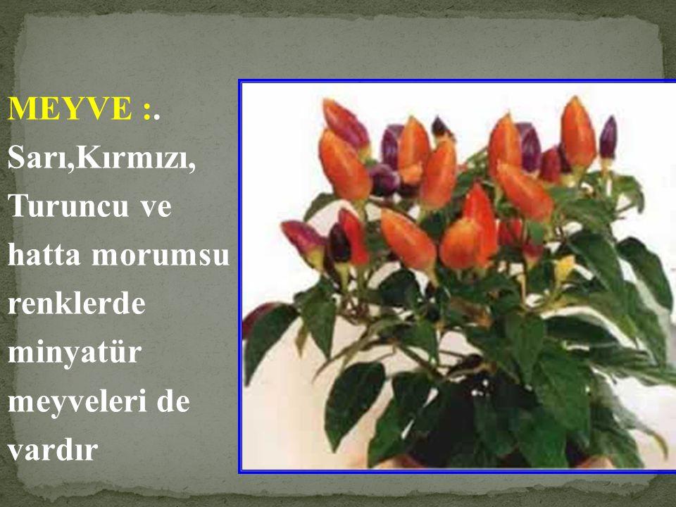 ÇİÇEK : Küçük beyaz çiçekleri güzel değildir, fakat ileride biberi oluşturacağından koparılmamalıdır.