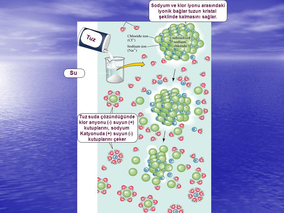 Sodyum ve klor iyonu arasındaki iyonik bağlar tuzun kristal şeklinde kalmasını sağlar. Tuz suda çözündüğünde klor anyonu (-) suyun (+) kutuplarını, so