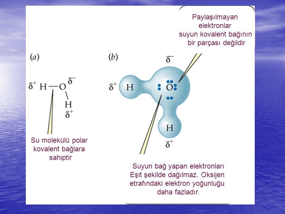İki Su Molekülü Arasındaki Hidrojen Bağı Polar Kovalent Bağ