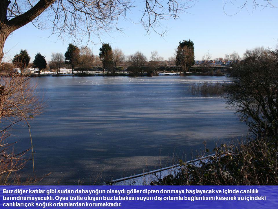 Buz diğer katılar gibi sudan daha yoğun olsaydı göller dipten donmaya başlayacak ve içinde canlılık barındıramayacaktı. Oysa üstte oluşan buz tabakası