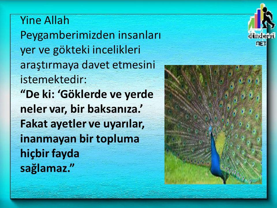 """Yine Allah Peygamberimizden insanları yer ve gökteki incelikleri araştırmaya davet etmesini istemektedir: """"De ki: 'Göklerde ve yerde neler var, bir ba"""