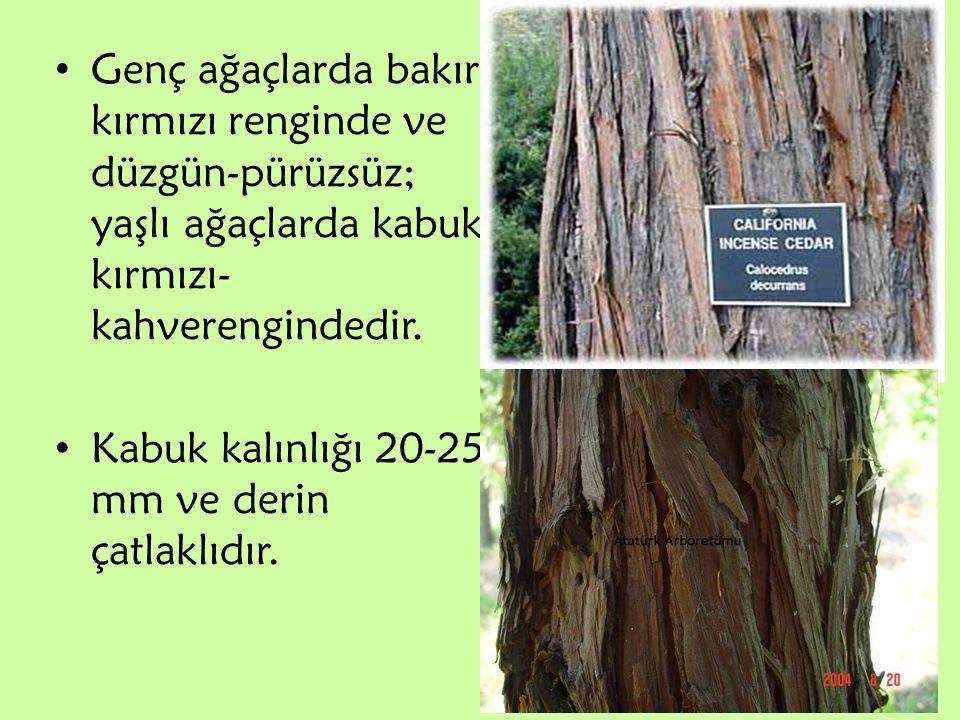 Genç ağaçlarda bakır kırmızı renginde ve düzgün-pürüzsüz; yaşlı ağaçlarda kabuk kırmızı- kahverengindedir. Kabuk kalınlığı 20-25 mm ve derin çatlaklıd