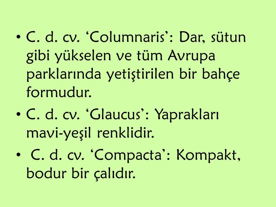 C. d. cv. 'Columnaris': Dar, sütun gibi yükselen ve tüm Avrupa parklarında yetiştirilen bir bahçe formudur. C. d. cv. 'Glaucus': Yaprakları mavi-yeşil
