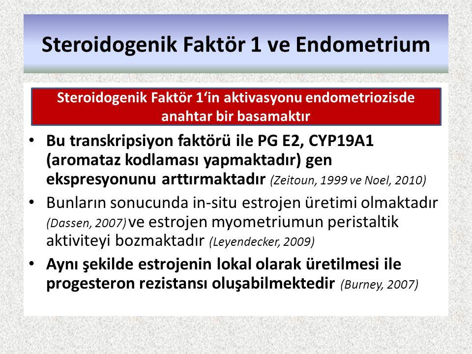Steroidogenik Faktör 1 ve Endometrium Bu transkripsiyon faktörü ile PG E2, CYP19A1 (aromataz kodlaması yapmaktadır) gen ekspresyonunu arttırmaktadır (
