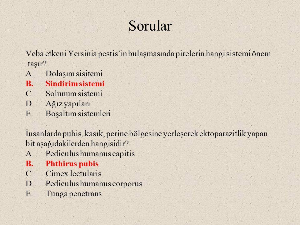 Sorular Veba etkeni Yersinia pestis'in bulaşmasında pirelerin hangi sistemi önem taşır? A.Dolaşım sisitemi B.Sindirim sistemi C.Solunum sistemi D.Ağız