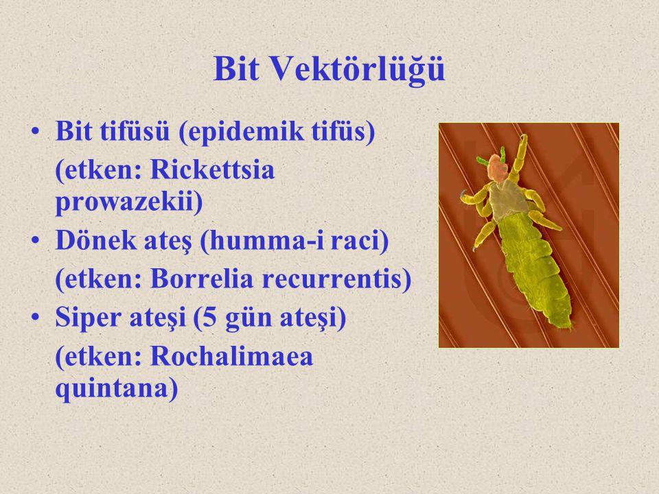 Bit Vektörlüğü Bit tifüsü (epidemik tifüs) (etken: Rickettsia prowazekii) Dönek ateş (humma-i raci) (etken: Borrelia recurrentis) Siper ateşi (5 gün a