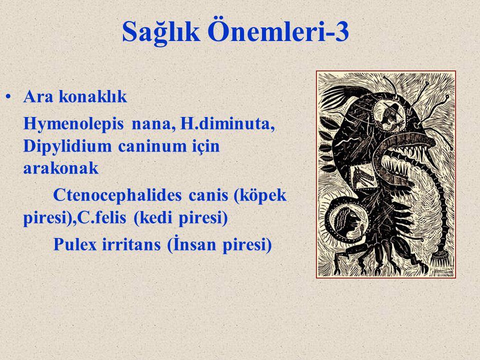 Sağlık Önemleri-3 Ara konaklık Hymenolepis nana, H.diminuta, Dipylidium caninum için arakonak Ctenocephalides canis (köpek piresi),C.felis (kedi pires