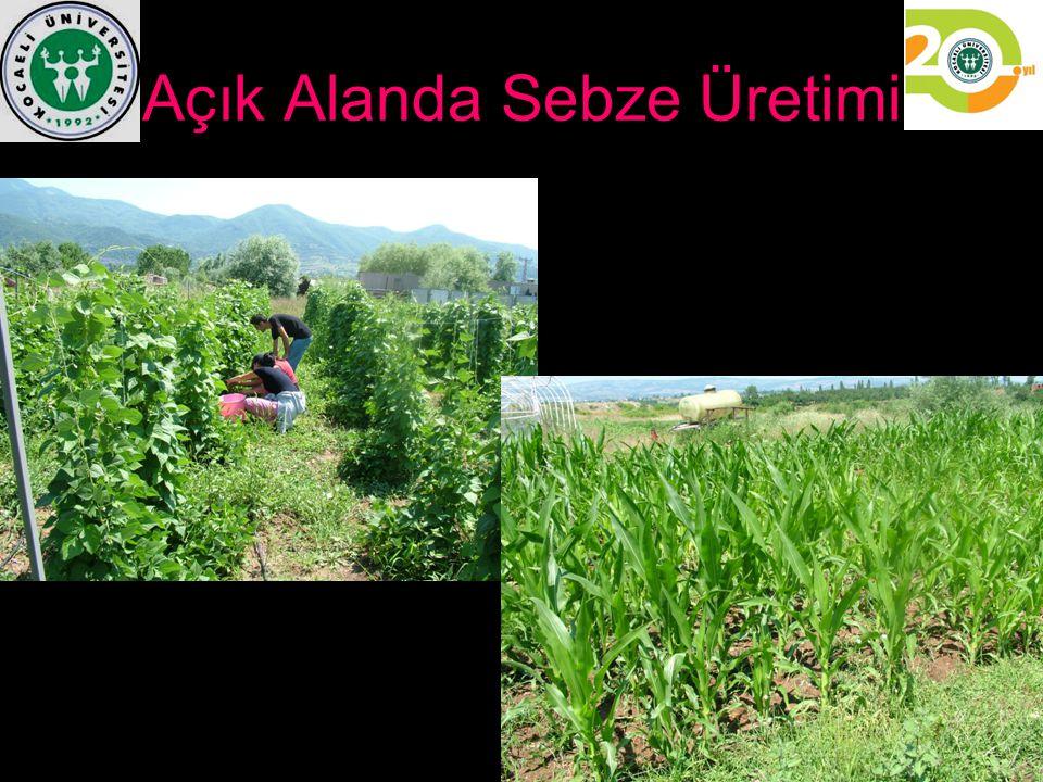 Açık Alanda Sebze Üretimi