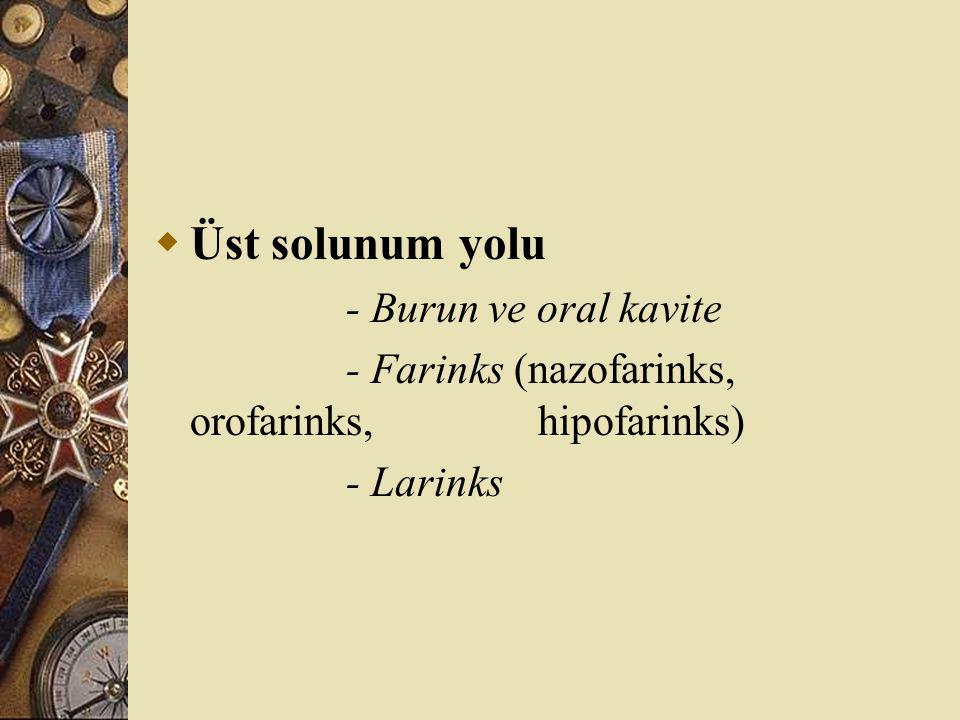  Üst solunum yolu - Burun ve oral kavite - Farinks (nazofarinks, orofarinks, hipofarinks) - Larinks