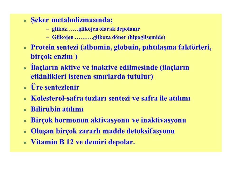 l Şeker metabolizmasında; –glikoz……glikojen olarak depolanır –Glikojen ……….glikoza döner (hipoglisemide) l Protein sentezi (albumin, globuin, pıhtılaş