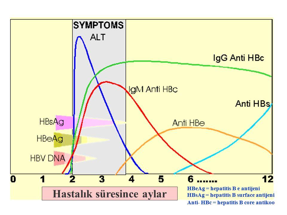 Hastalık süresince aylar HBeAg = hepatitis B e antijeni HBsAg = hepatitis B surface antijeni Anti- HBc = hepatitis B core antikoo