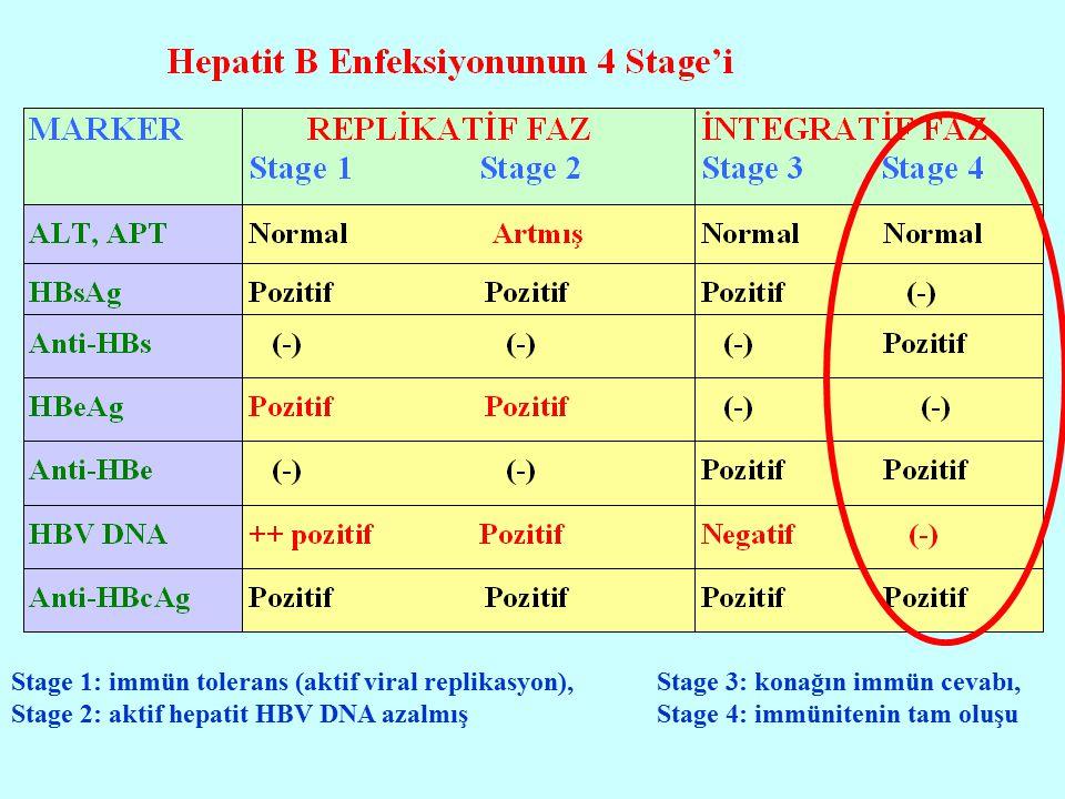 Stage 1: immün tolerans (aktif viral replikasyon), Stage 2: aktif hepatit HBV DNA azalmış Stage 3: konağın immün cevabı, Stage 4: immünitenin tam oluş