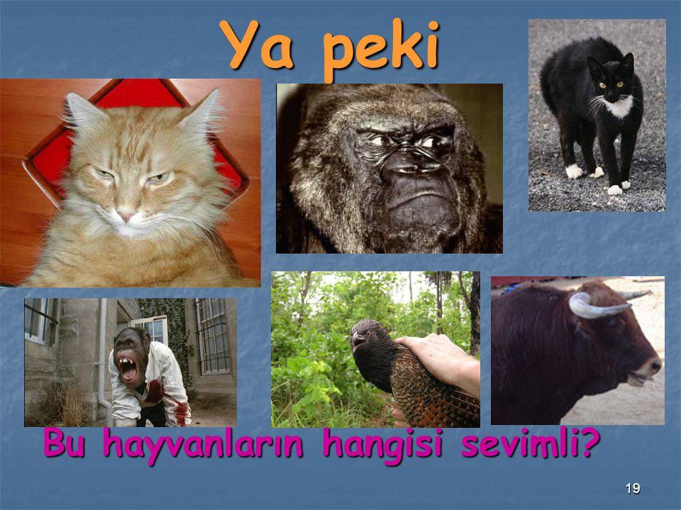 19 Ya peki Bu hayvanların hangisi sevimli?