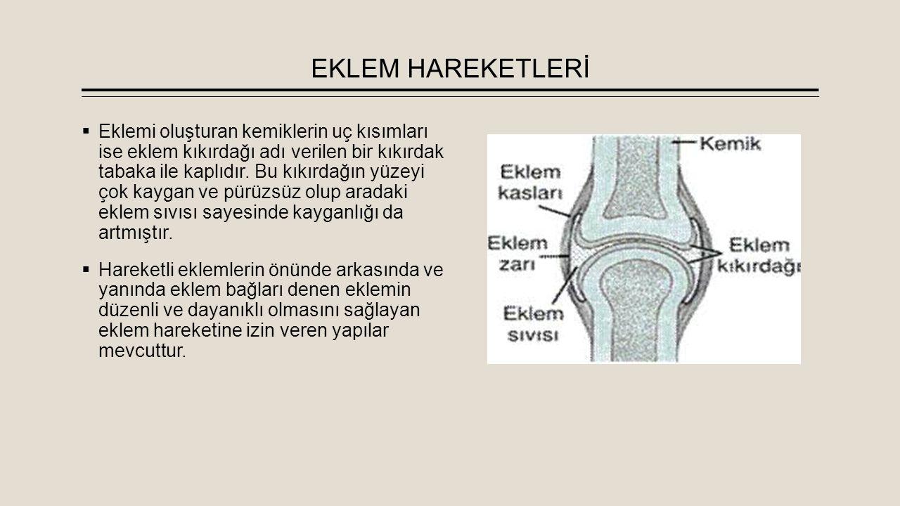 EKLEM HAREKETLERİ  Eklemi oluşturan kemiklerin uç kısımları ise eklem kıkırdağı adı verilen bir kıkırdak tabaka ile kaplıdır. Bu kıkırdağın yüzeyi ço