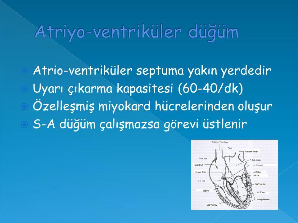  Atrio-ventriküler septuma yakın yerdedir  Uyarı çıkarma kapasitesi (60-40/dk)  Özelleşmiş miyokard hücrelerinden oluşur  S-A düğüm çalışmazsa görevi üstlenir