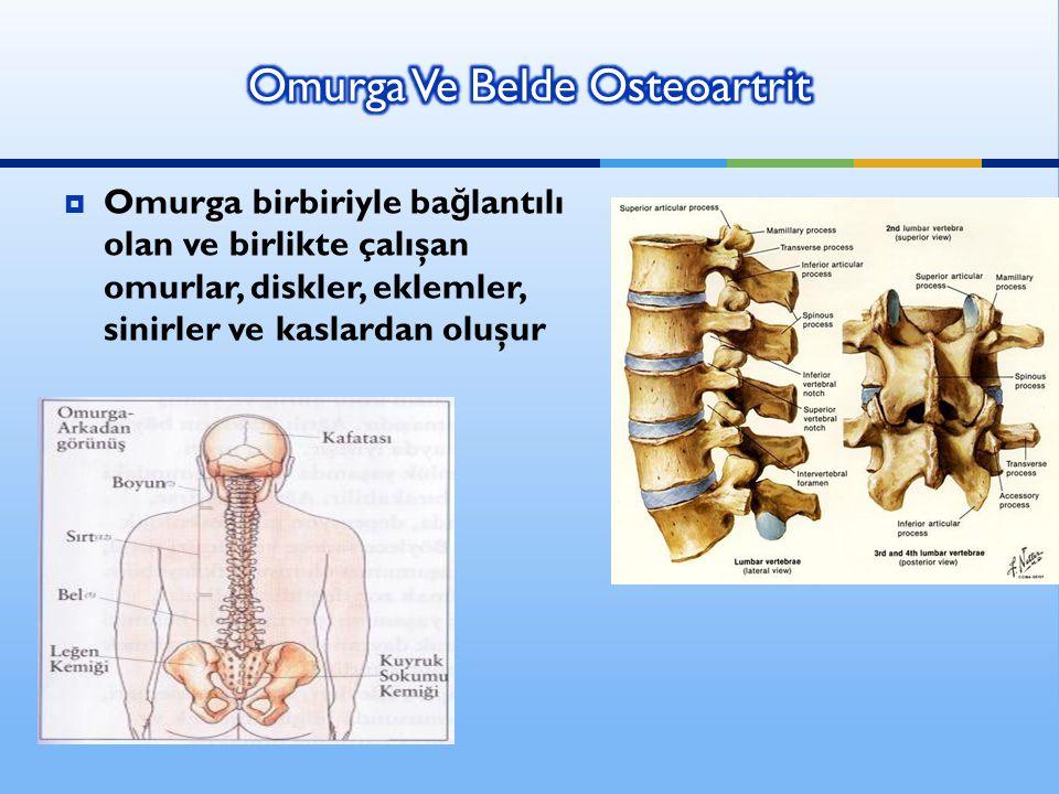  Omurga birbiriyle ba ğ lantılı olan ve birlikte çalışan omurlar, diskler, eklemler, sinirler ve kaslardan oluşur