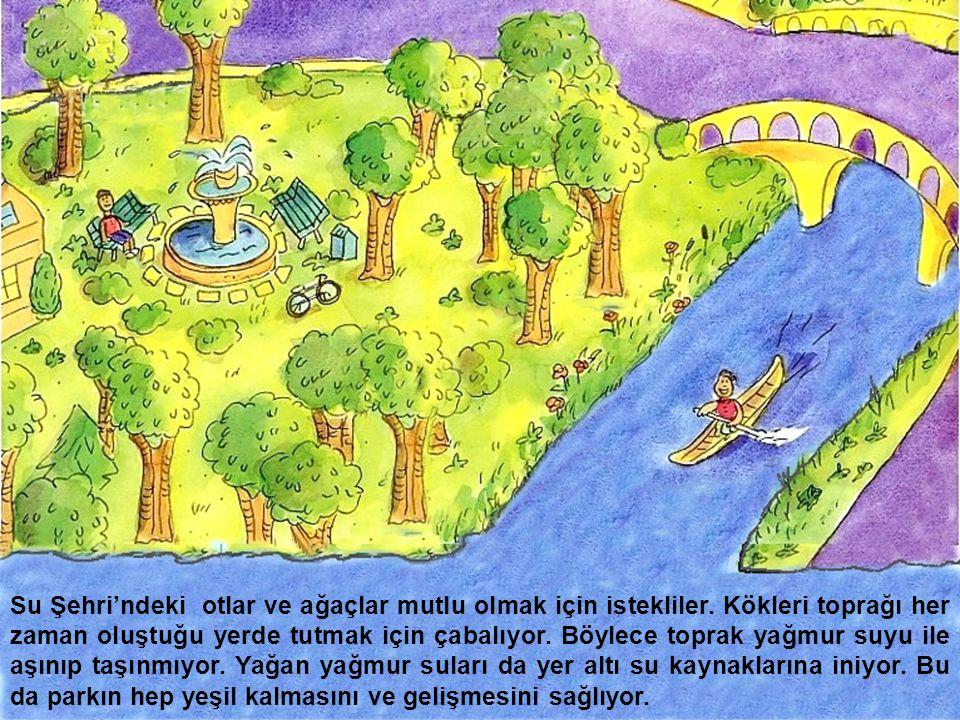 Su Şehri'ndeki otlar ve ağaçlar mutlu olmak için istekliler. Kökleri toprağı her zaman oluştuğu yerde tutmak için çabalıyor. Böylece toprak yağmur suy