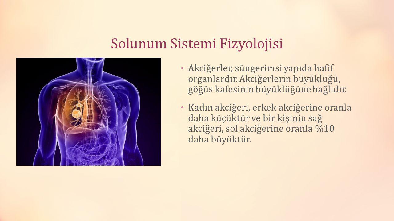 Solunum Sistemi Fizyolojisi Akciğerler, süngerimsi yapıda hafif organlardır. Akciğerlerin büyüklüğü, göğüs kafesinin büyüklüğüne bağlıdır. Kadın akciğ