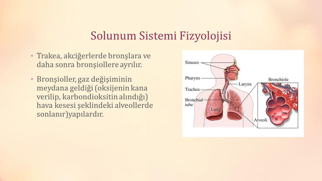 Solunum Sistemi Fizyolojisi Trakea, akciğerlerde bronşlara ve daha sonra bronşiollere ayrılır. Bronşioller, gaz değişiminin meydana geldiği (oksijenin